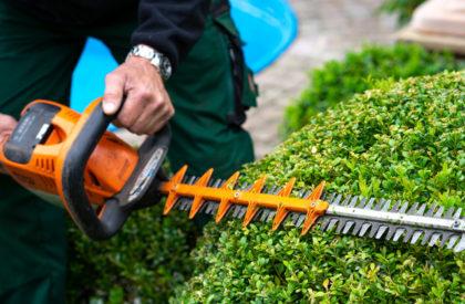 Gartenpflege Strauchschnitt Wildeshausen Ganderkesee